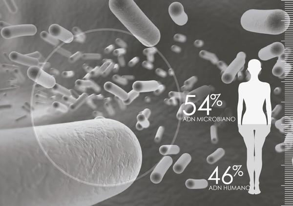 Porcentaje dna probioticos